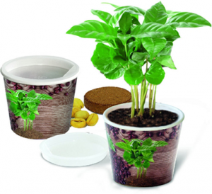 kit-de-plantation-cafe-a-personnaliser.png
