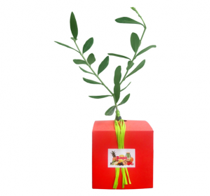 plante-cube-pago.png